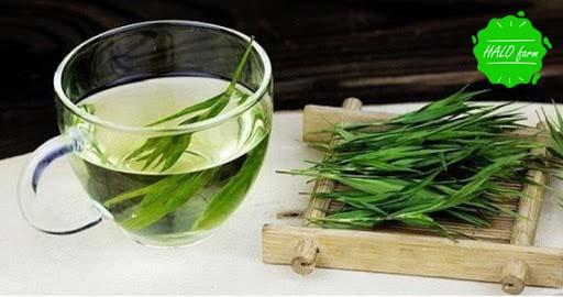 Trà lá tre hữu cơ tốt cho sức khỏe